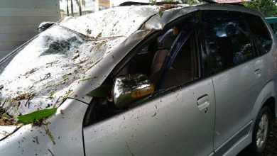 Photo of Pohon Tumbang Menimpa Mobil Avanza