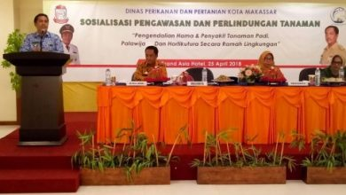 Photo of DP2 Makassar Galakkan Program Urban Farming